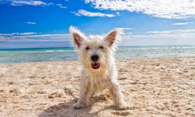 día de playa con tu perro