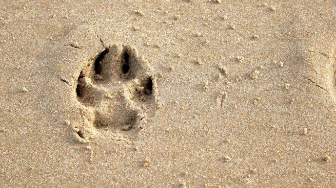 un día de playa con tu perro
