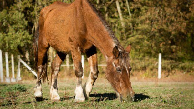 alimentación de tu caballo