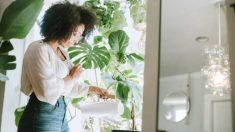Pasos para eliminar la cal del agua de regar las plantas
