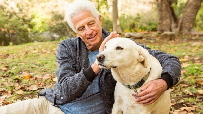 perro en avanzada edad