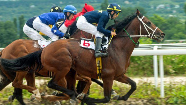 caballo purasangre