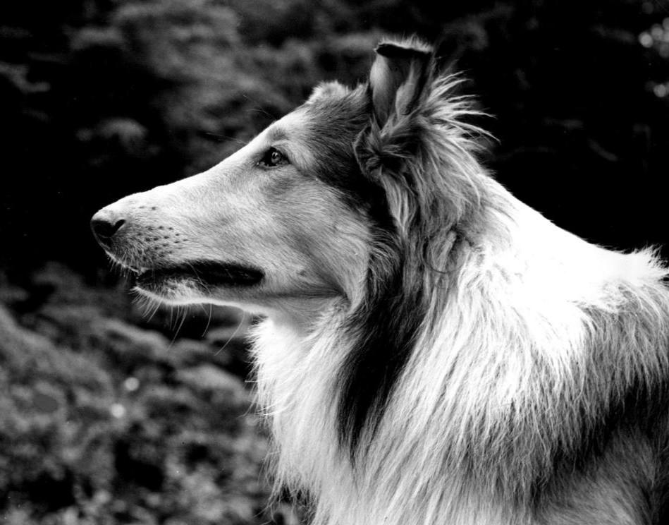 Las mascotas más famosas del cine y la televisión