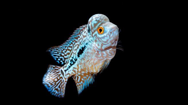 peces bonitos