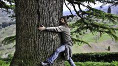 Un mínimo contacto con la naturaleza mejora nuestra salud, según un estudio