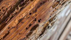 Aprende los pasos para reparar la madera podrida