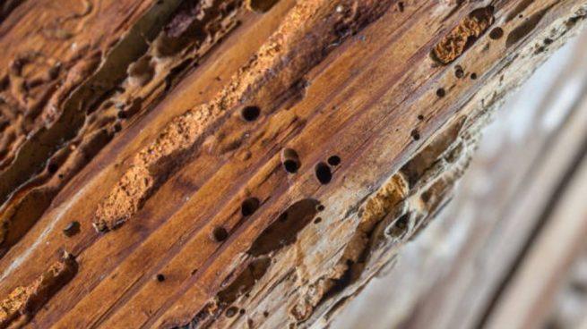 madera podrida