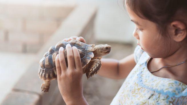 cuidar a una tortuga en casa