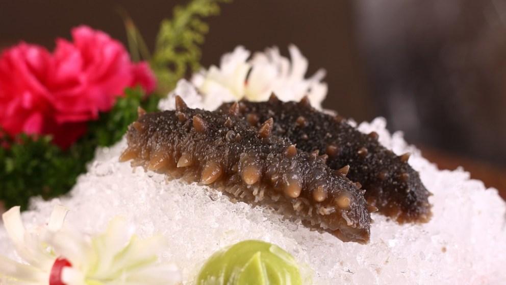 Descubre qué es un pepino de mar