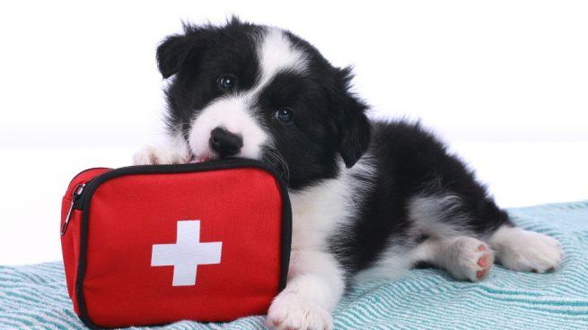 botiquín para tu mascota