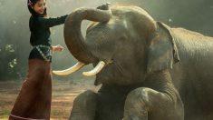 Qué sabes de los colmillos de los elefantes