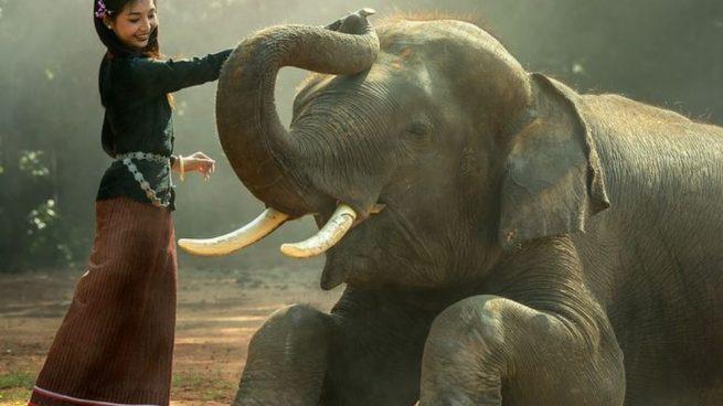 Los elefantes hacen uso de sus colmillos para un amplio abanico de funciones.