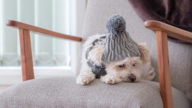 Perros de pequeño tamaño