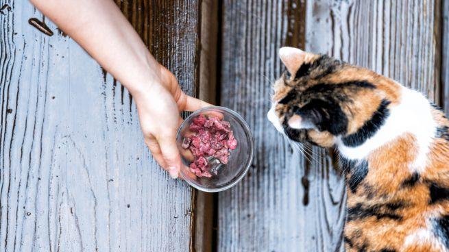 ¿Es mejor la comida casera o la comercial para tu gato?