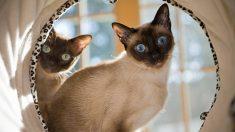 Aprende cómo hacer un túnel para gatos