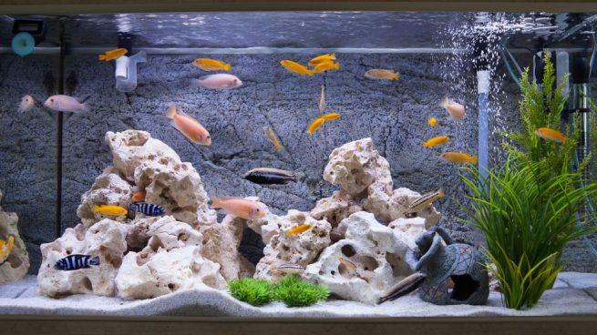 enfermedades de los peces