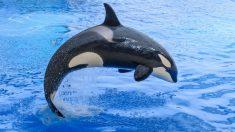 Animales marinos de mayor tamaño