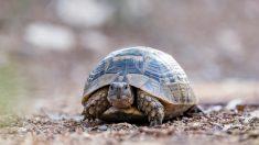 Tipos de tortugas y diferencias