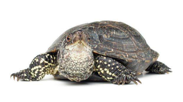 reptiles de mayor tamaño
