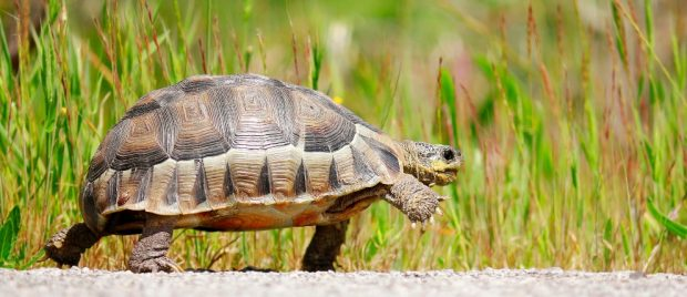 clases de tortugas