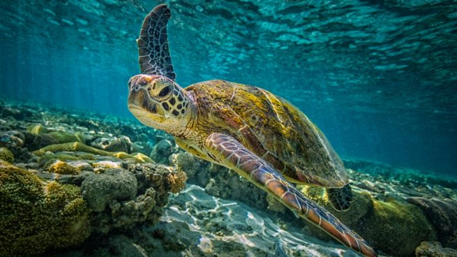 clases diferentes de tortugas