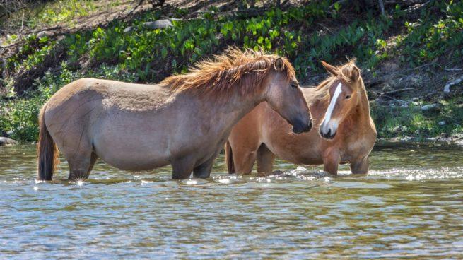 caballo en verano