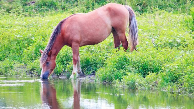 tu caballo en verano