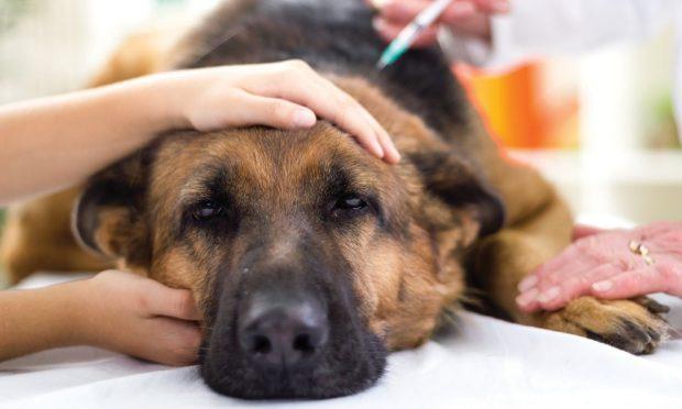 vacunas importantes para perros