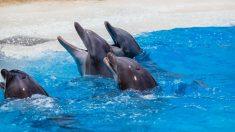 Delfines esperando su alimentación