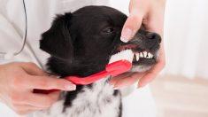 Cepillado dientes, hábitos de higiene dental en tu perro