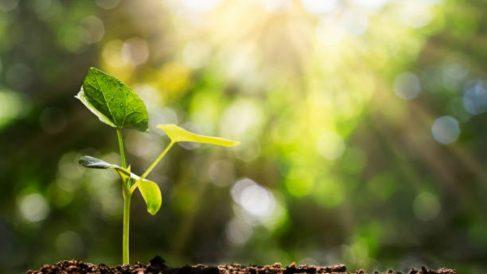Aprende cómo redirigir la luz solar para las plantas