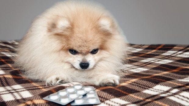 Pastillas para perro