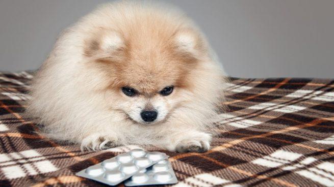 dar una pastilla a tu perro