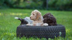 Todos los pasos para hacer una cama para perros con un neumático
