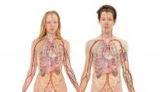 Descubre qué es la pielonefritis