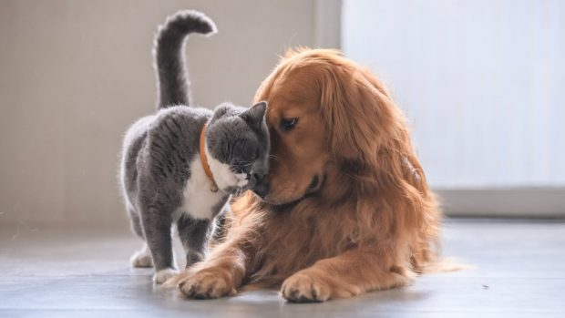 alimentación entre perros y gatos