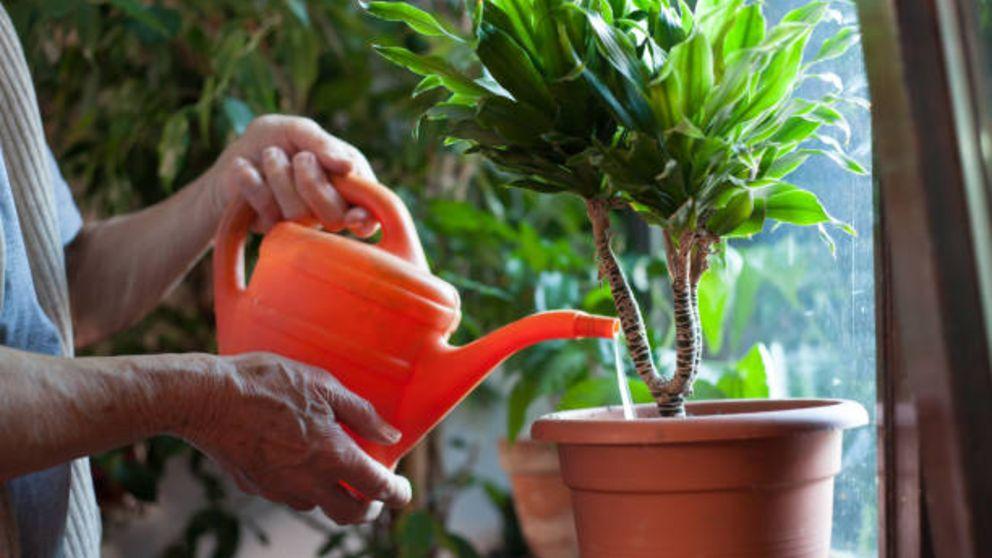 Aprende cómo podemos evitar el agua estancada en las macetas