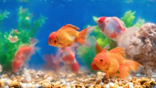 acuario en verano