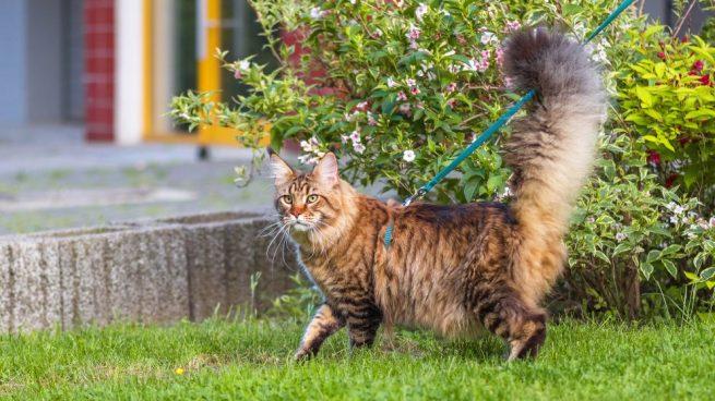sacar a pasear a tu gato