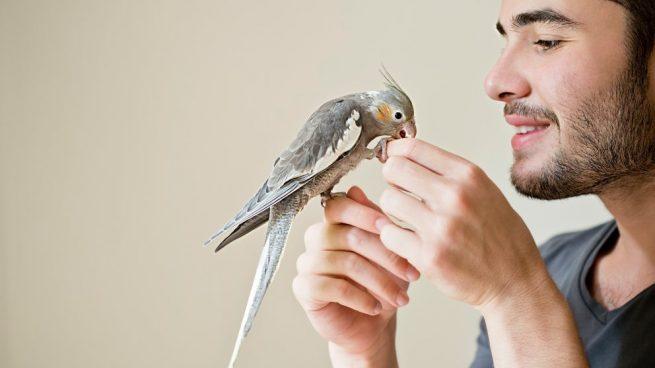 desparasitar a tus pájaros