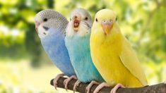 Descubre 5 pájaros exóticos que puedes tener en casa como mascota