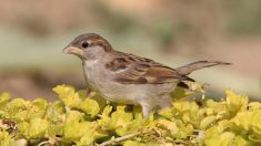 Descubre enfermedades de pájaros que se detectan en sus plumas