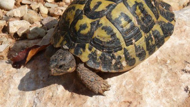 Come sapere quanti anni ha una tartaruga