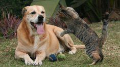 Descubre enfermedades comunes que transmiten perros y gatos