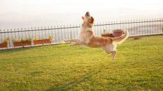 Todos los pasos para saber cómo construir una valla para perros