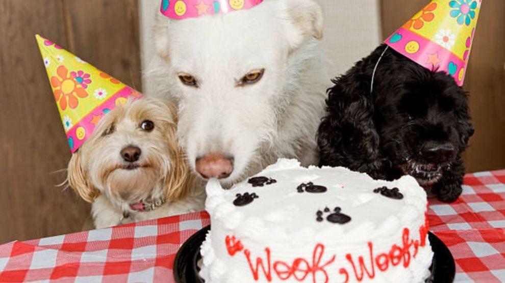 Pasos e ideas para organizar una fiesta de cumpleaños para tu perro