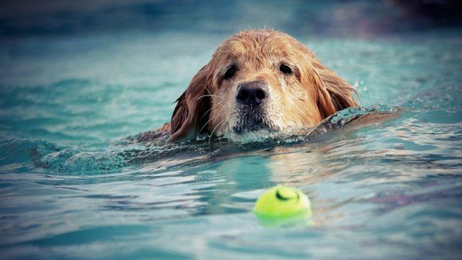 piscinas para perro