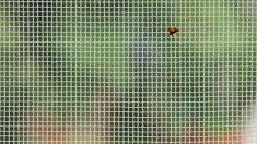 Guía de pasos para saber cómo arreglar un agujero en una mosquitera