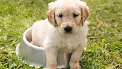 Facebook: Se lleva al perro al trabajo y causa sensación