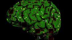 El sentido del tacto surge en el cerebro antes de nacer